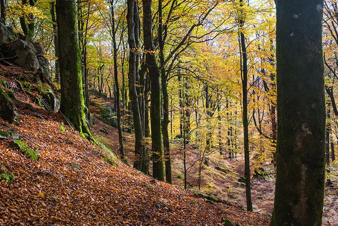 skogsbo