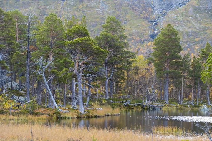 skog_urskog_vildmark